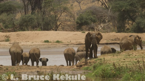 elephants-by-the-river-w