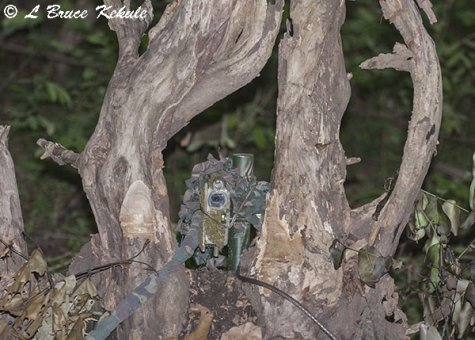 Nikon D700 camera trap ML-3 transmitter