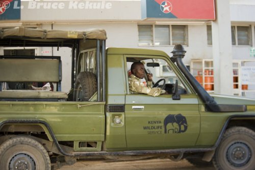 Kenyan ranger - Wildlife Service