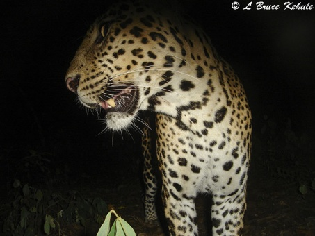 leopard up-close to S600