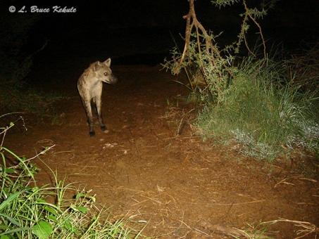 Africa, Kenya 2012