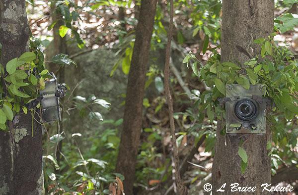 Canon 350D camera trap