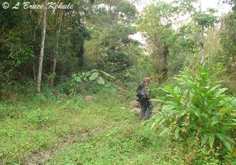 Tiger hunter in Huai Kha Khaeng