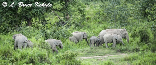 Elephant herd in Kuiburi NP