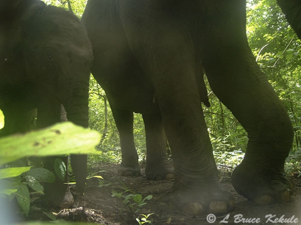Mother elephant and baby in HKK