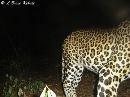 A leopard passing by the S600