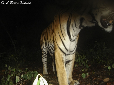 tiger up-close to a S600