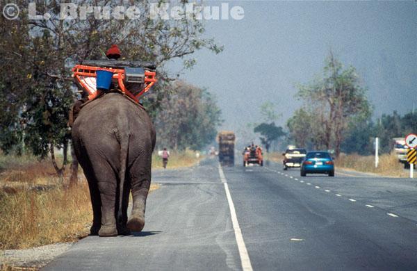 Elephant in Ayuttaya province