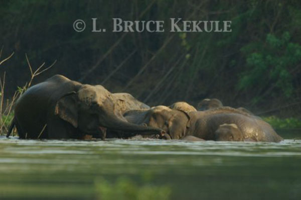Elephants in Huai Kha Khaeng1