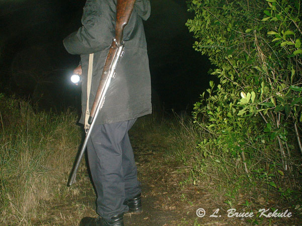 Patrol ranger with .458 Winchester M70 in Siana Springs Tented Camp