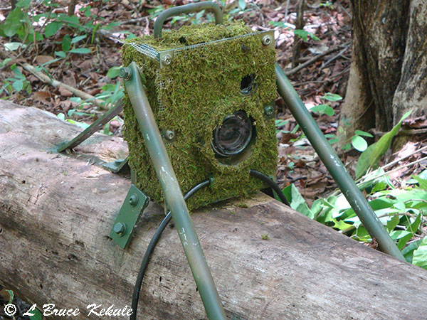 Nikon d700 and canon 350d trail cams on location wildlife photography in thailand and - Midden kamer trap ...