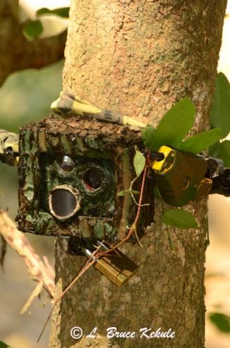 LBK 1010/S600/SS II #3 camera trap in the field