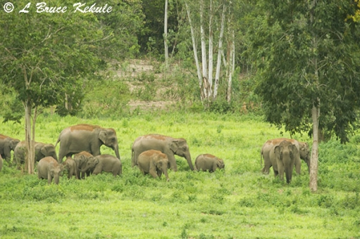 Elephants in Kui Buri NP