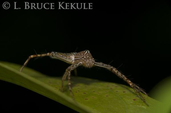 Jumping spider in Khao Ang Rue Nai