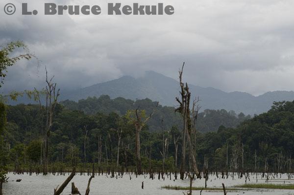 Khlong Saeng flooded forest