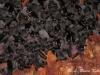 Bats in a cave in Sai Yok