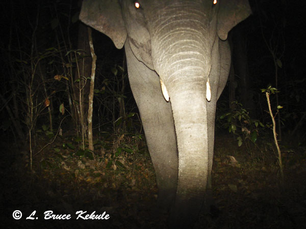 tusker-elephant2-w