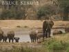 Elephants by the river in Samburu