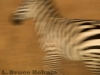 Zebra abstract in Kenya