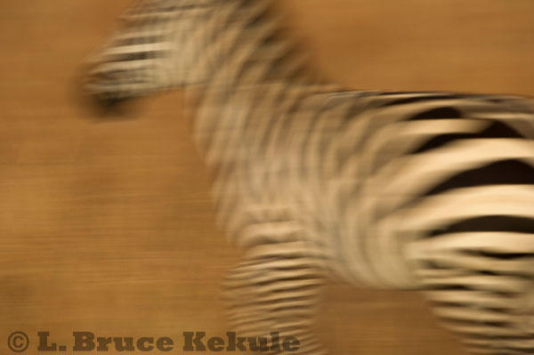 Zebra abstract in Kenya