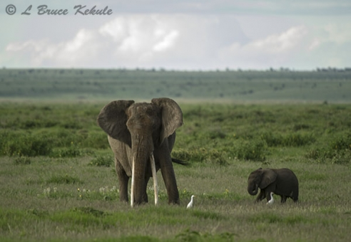 Mother elephant and calf in Amboseli