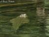 Nile Crocodile Tsavo West NP