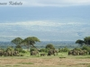 Elephant's in Amboseli NP