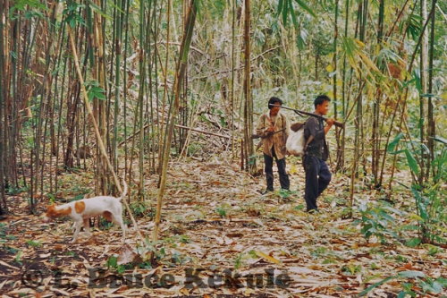 Poachers in Sai Yok NP