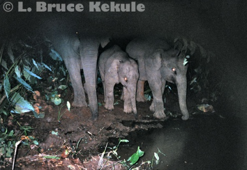 Elephant family unit in Khao Ang Rue Nai