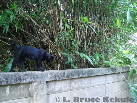 black-cat-behind-house-w