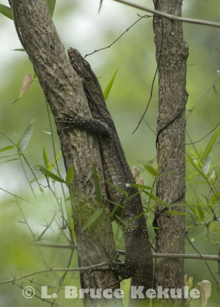 Forest Monitor