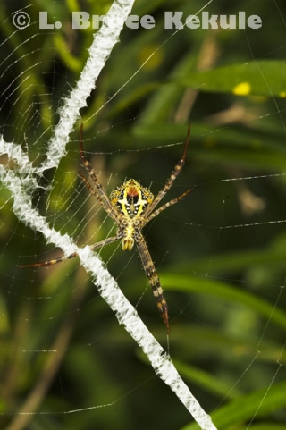 Spider in Thung Yai