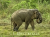 Tusker at mineral lick in Khao Ang Rue Nai WS