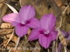 Deciduous flower