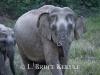 Mother elephant and calf at mineral lick in Khao Ang Rue Nai WS