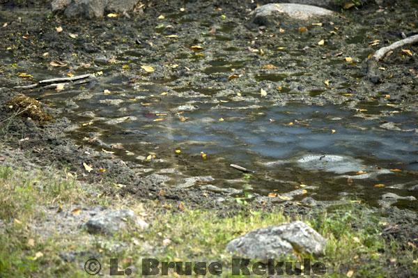 Waterhole mineral deposit in Huai Kha Khaeng