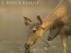 Sambar doe and yearling