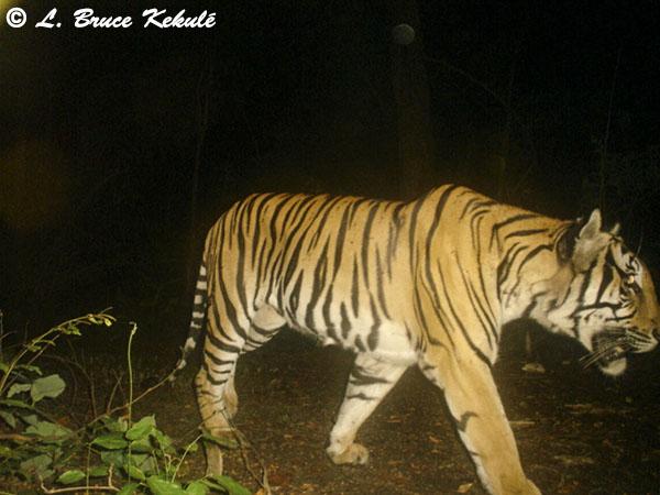 Tiger1 - P41