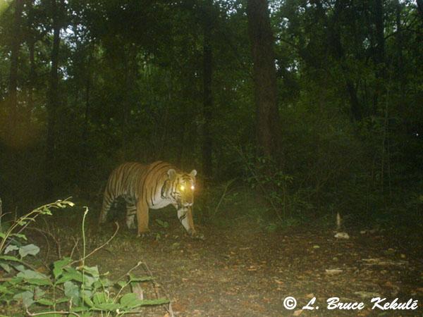 Tiger2 - P41