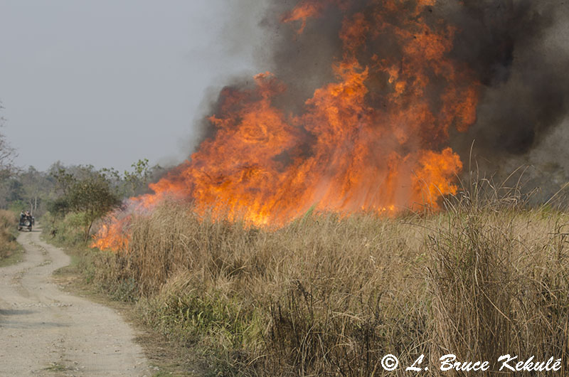 Control burning in Kaziranga NP