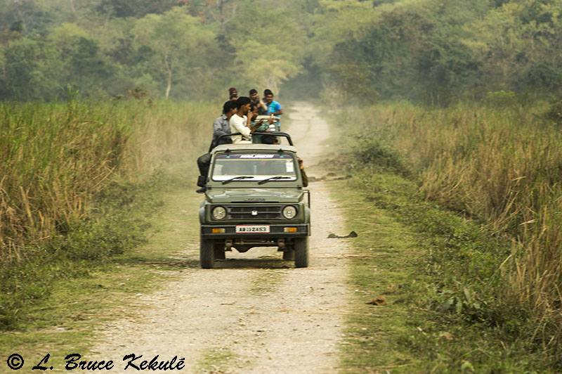 Maruti jeep and visitors to Kaziranga