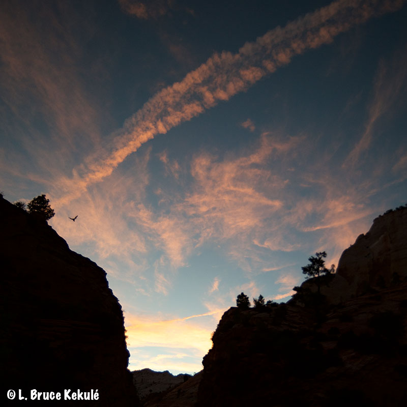sunset-at-zion-with-eagle-web