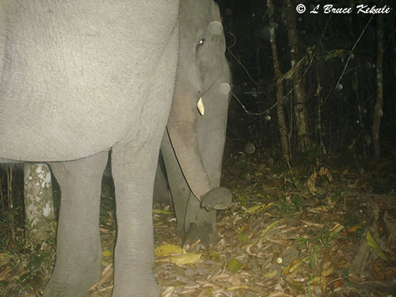 Elephants in Huai Kha Khaeng Wildlife Sanctuary, western Thailand.