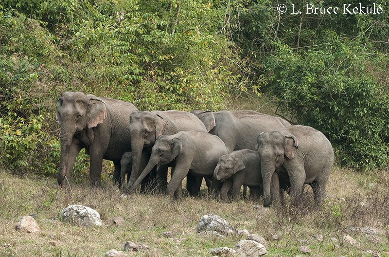Elephant family unit in HKK Feb. 2016