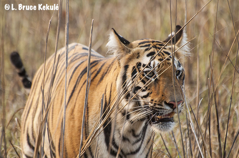 Tadoba cub close-up