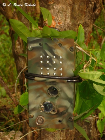Egbertdavis DXG 125/LBK elephant proof box in the field