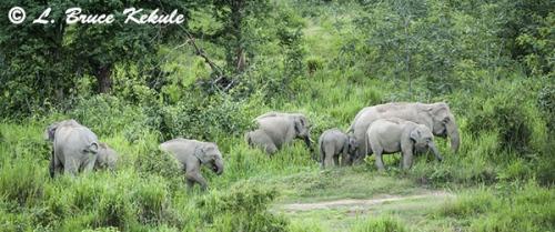 Elephant herd in Kuiburi NP