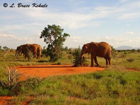 elephants-in-tsavo-east-national-park