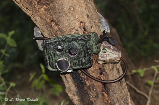 Sony S600 camera trap in  Tsavo (West) National ParK