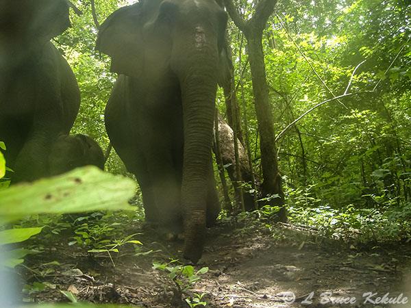Elephants in HKK
